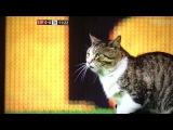 Кошка на  Энфилде, Ливерпуль-Тотенхем